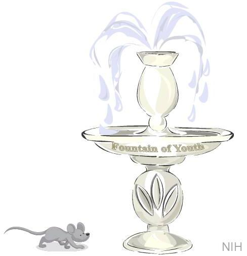 Mouse walking towards a fountain