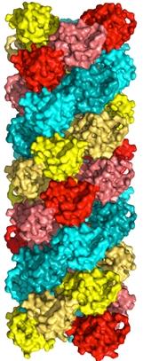 ASC protein