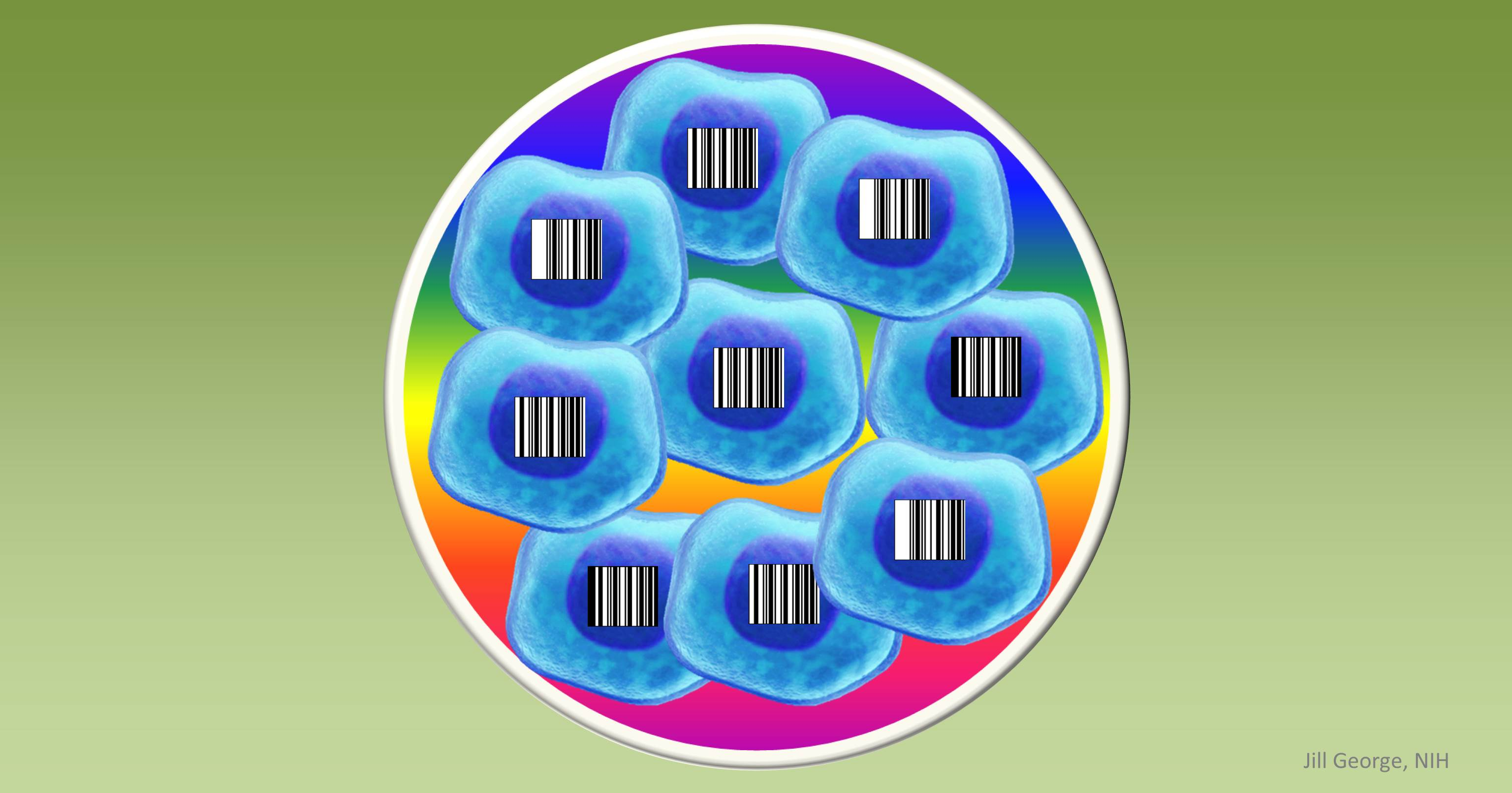 Cells labeled with barcodes