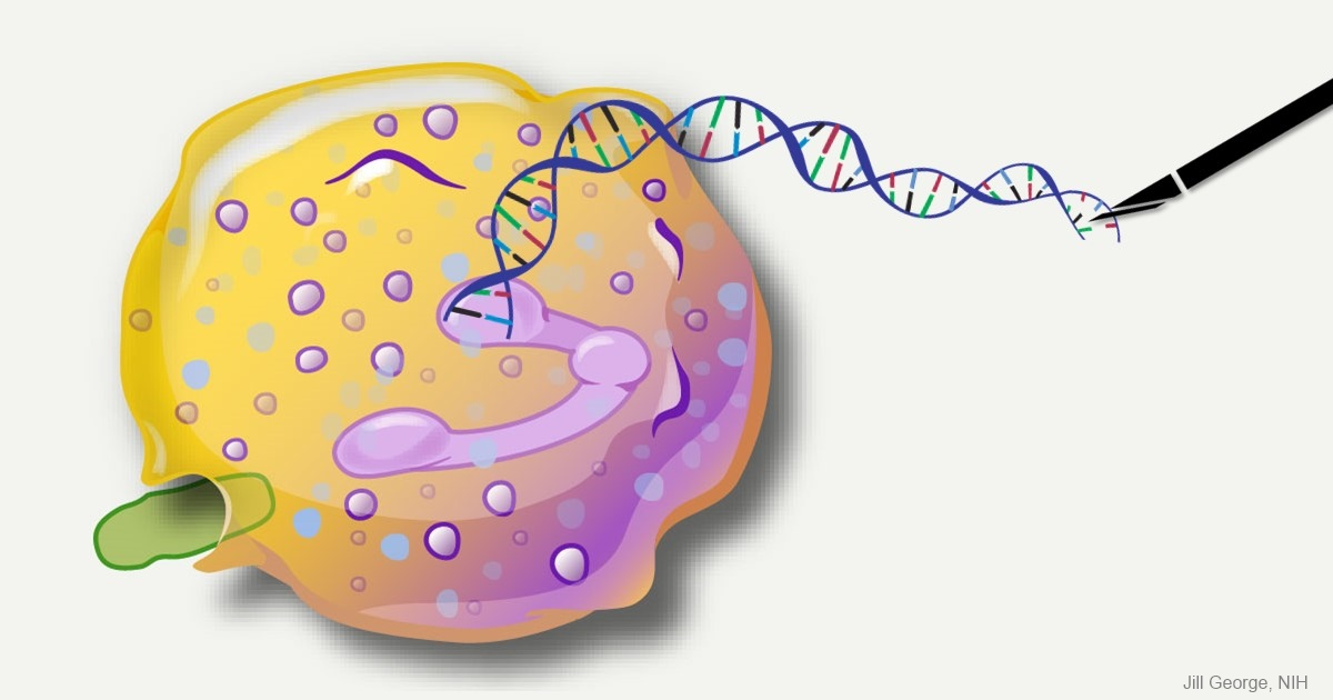 Neutrophil being edited with CRISPR/Cas9