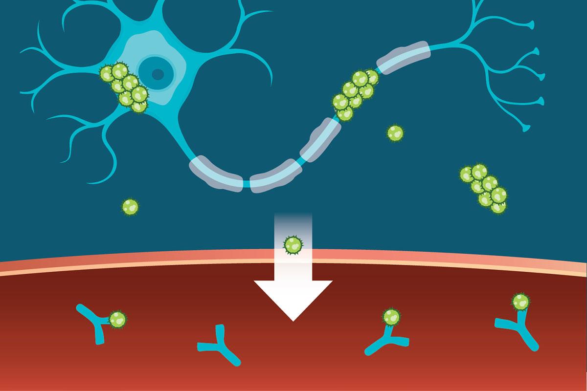 Antibodies to Tau