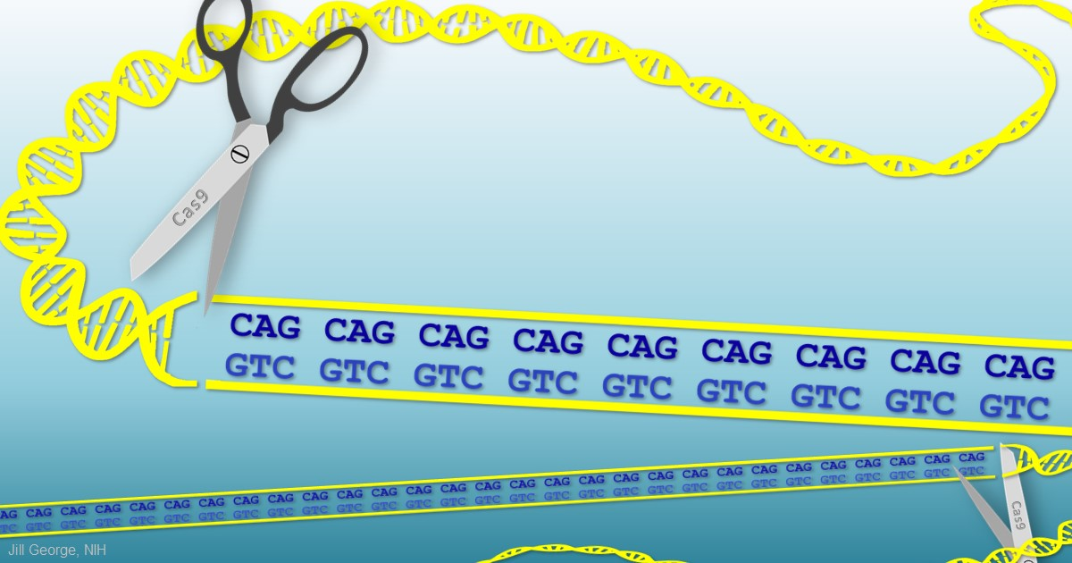 Cas9 clipping the Huntington's repeats