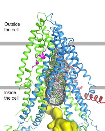 CryoEM of CFTR