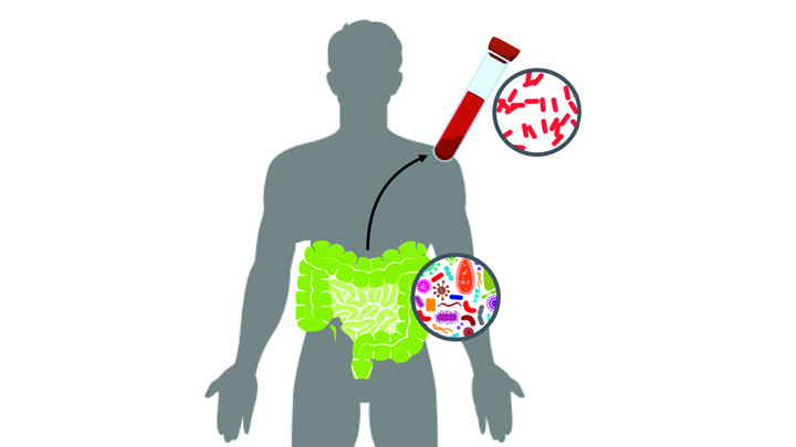 Bacteria in both blood and gut