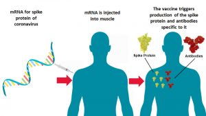 Diagram of how mRNA vaccine works
