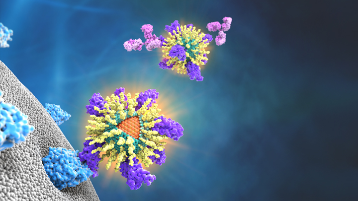 Viruses with nanoparticles attached