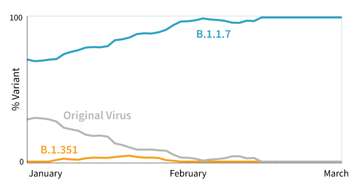 Graph showing percentages of virus variants. B.1.1.7 is nearly 100% by March