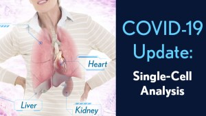 COVID-19: Single-Cell Analysis