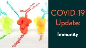 COVID-19 Update: Immunity. Orginal viral spike is shown binding to antibody from vaccine and from infection. Variant spikes only bind to antibody from vaccine.